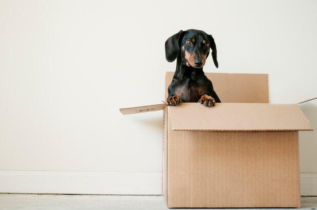 vierkante doos hond